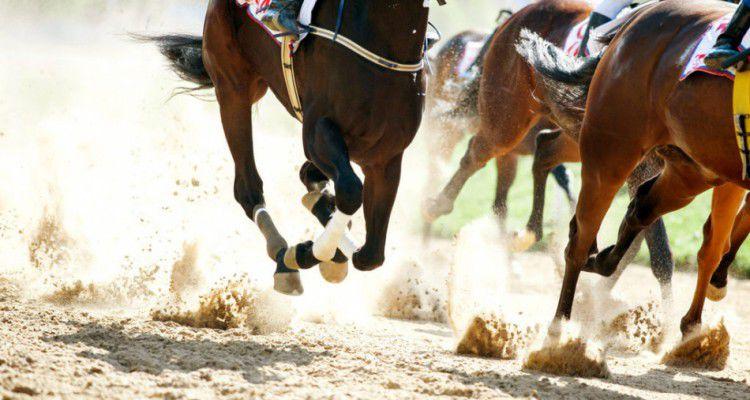 В Приморье будут развивать скачки с тотализатором и конный спорт