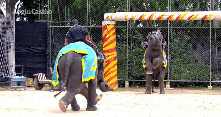 В Бангкоке слоны сыграли в футбол, чтобы привлечь внимание зрителей ЧМ-2018 к проблеме незаконных ставок