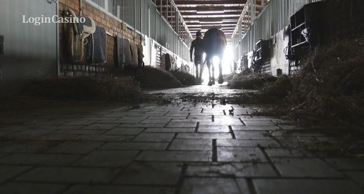 Полиция Новой Зеландии провела обыск в конюшнях